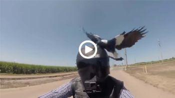 Μεγάλο πουλί Τζακ off βίντεο